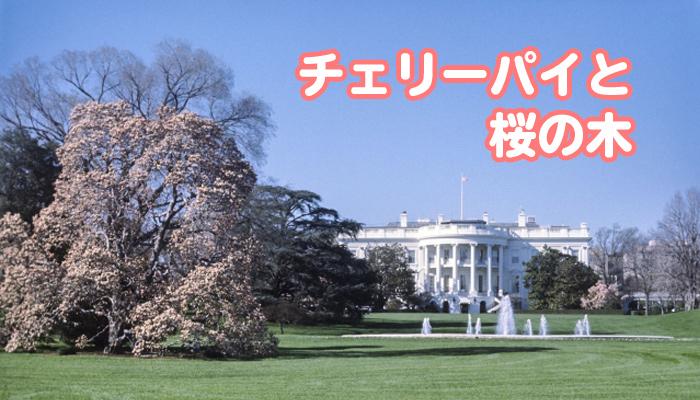 チェリーパイと桜の木