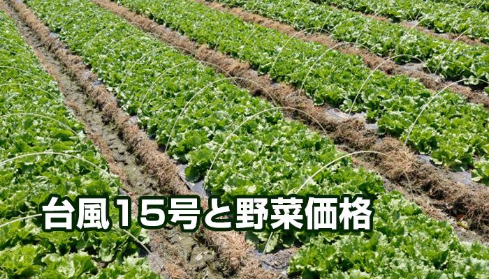 台風15号と野菜価格